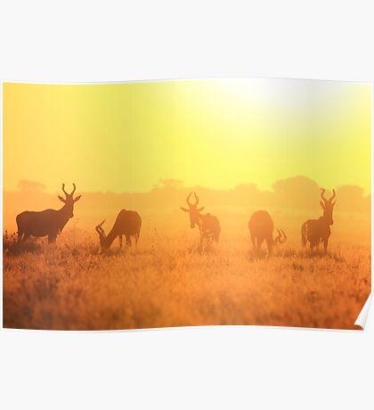 Red Hartebeest - Golden Symmetry - African Wildlife Poster