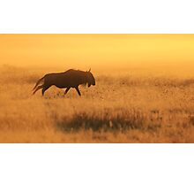 Blue Wildebeest - African Wildlife - Nature's Faded Gold Photographic Print