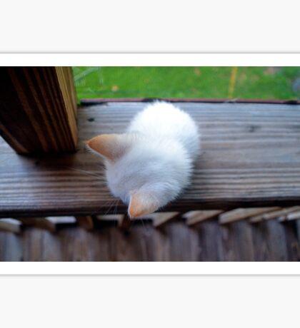 Morning Kitten Sticker