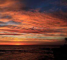 Glorious Sunrise Burleigh Heads by Noel Elliot