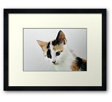 The Naughty Tortie Framed Print