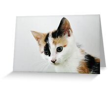 The Naughty Tortie Greeting Card