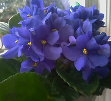 Blue Violets In The Window by susangabrielart