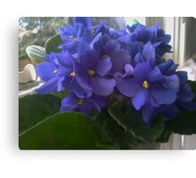 Blue Violets In The Window Canvas Print