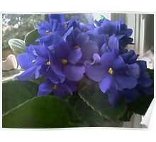 Blue Violets In The Window Poster