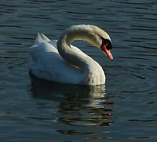 quest for the light -the white swan by yesdigiterarte