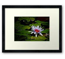 Water Lily in Periwinkle Framed Print
