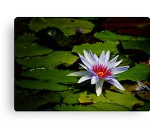Water Lily in Periwinkle Canvas Print