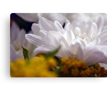 Natural background with white petals and small yellow flowers. Canvas Print
