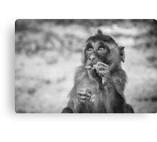 Monkey - Thailand Canvas Print