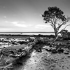 Tenby Point - Mangrove Sunset Black and White by Ben  Cadwallader