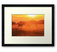 Zebra - Sunset Gold - African Wildlife Background Framed Print