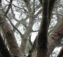 Tree Path by Penny Kittel