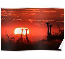 Giraffe - Sunset Love of Red - African Wildlife Background Poster