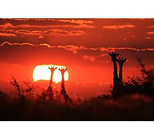 Giraffe - Sunset Love of Red - African Wildlife Background Photographic Print