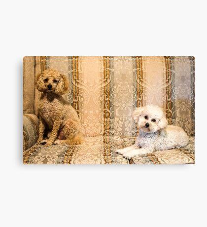 Painterly Poodles Canvas Print