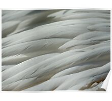 Abstract feathers Poster