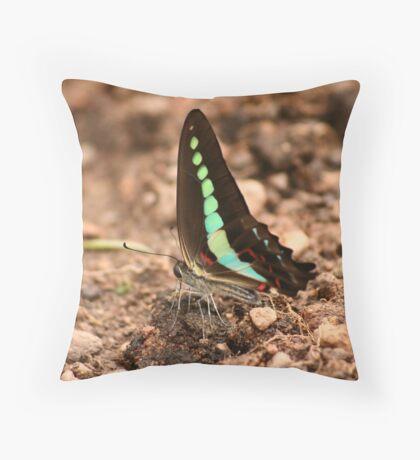 Butterfly - 6 Throw Pillow