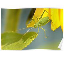 Speckled Bush Cricket Poster