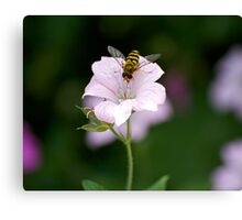 Wasp on flower Canvas Print