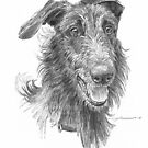 hairy handsome dog drawing by Mike Theuer