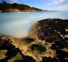Green Waterholes by Angelika  Vogel