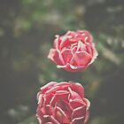 Pink Rose Pair by Bethany Helzer