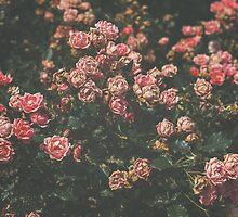 Estate Rose Garden by Bethany Helzer