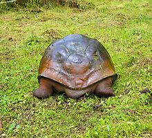 North End Of  Galapagos Giant Tortoise Going South by Al Bourassa