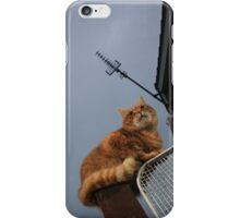 Ginger cat on gatepost iPhone Case/Skin