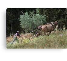 Teamwork. Horses and minder ploughing field Canvas Print
