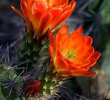 """ Desert Color "" by K D Graves Photography"
