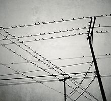 Birds On A Wire I by naomitamar