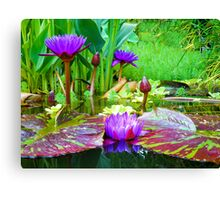 Summer Lily Pond Canvas Print