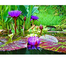 Summer Lily Pond Photographic Print