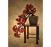 Bonsai Beauty Photographic Print