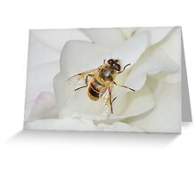 Hoverfly on Rose Greeting Card