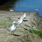 Seagulls by amylw1