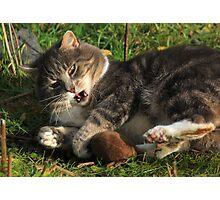 Playful cat Photographic Print