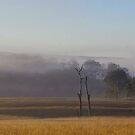 Misty dawn at Manumbar by Penny Kittel