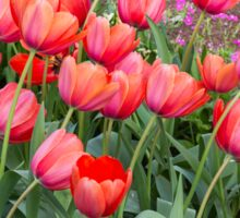 Pretty Red Tulips Sticker