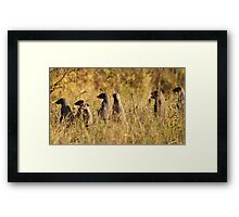 Banded Mongoose - African Wildlife Background - Band of Brothers Framed Print