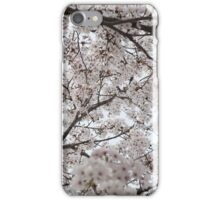 Cherry Blossoms All Around iPhone Case/Skin