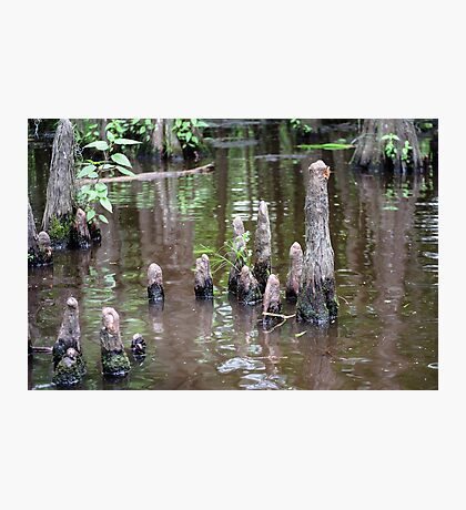 Cypress Knees Photographic Print