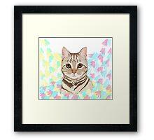 Tabby Kitten Splash Framed Print