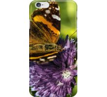 The Red Admiral iPhone Case/Skin