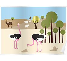 Ostriches in the desert  Poster