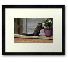 Spring is Here! Framed Print