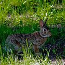 Peter Cottontail by Rebecca Reist