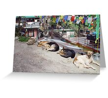 Dogs of North India Greeting Card
